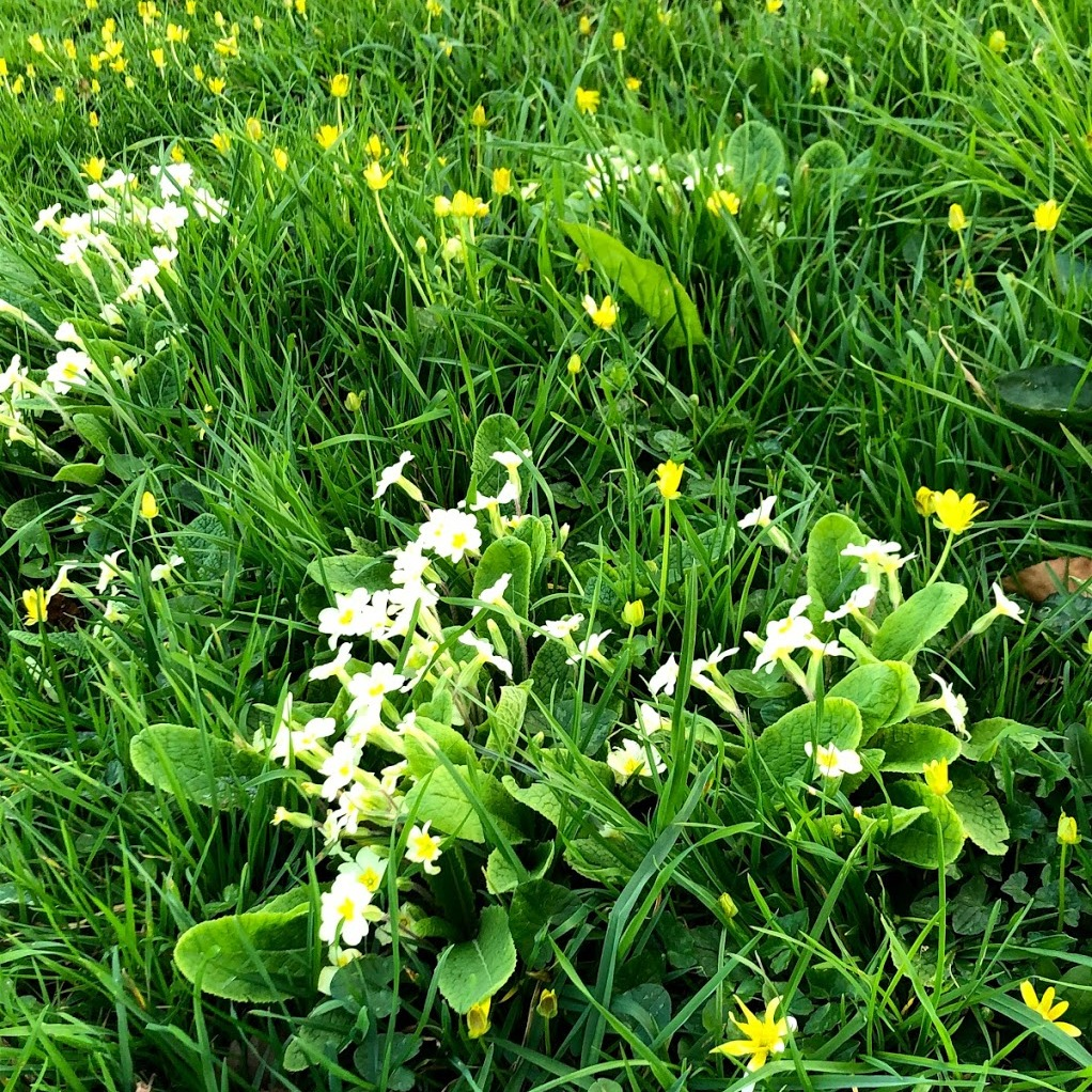 Photo of Primroses at Somermead, Outdoor Camping and Activity Venue
