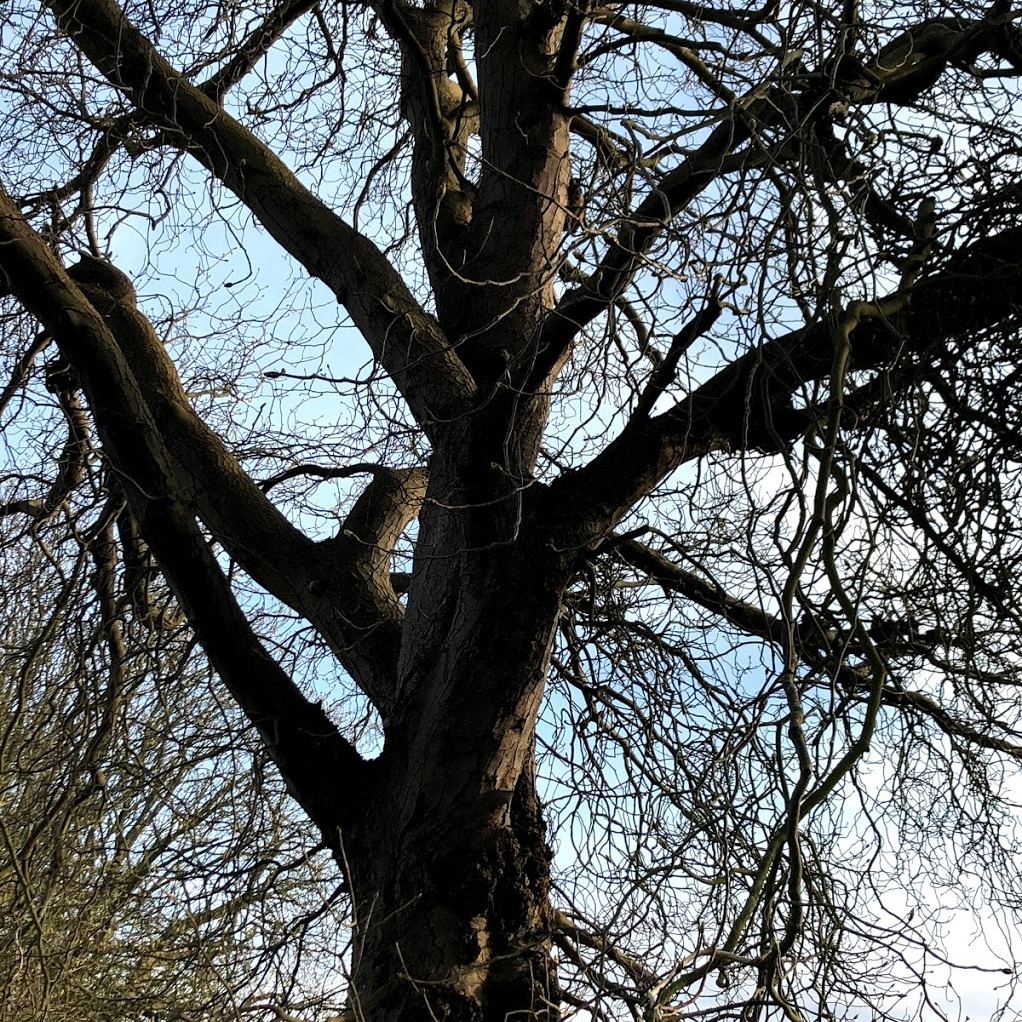 Photo of Tree at Somermead, Outdoor Camping and Activity Venue