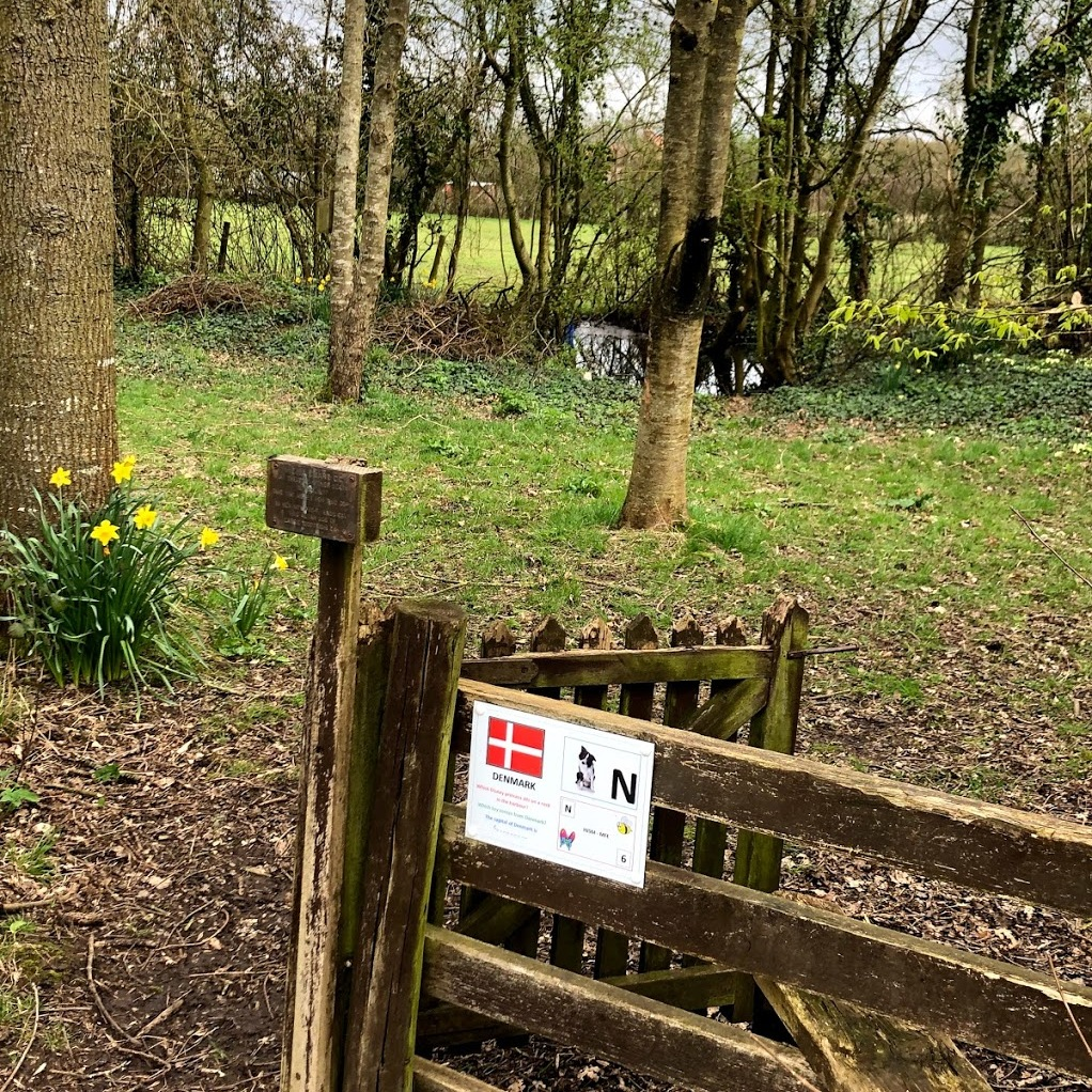Photo of woods and daffodils at Somermead, Outdoor Camping and Activity Venue