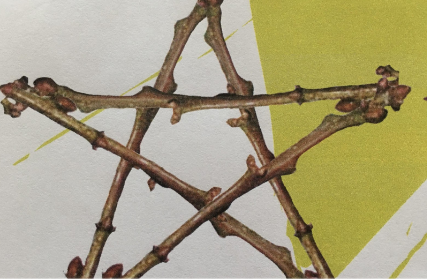 Image of a twig star