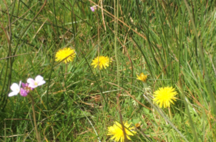 Photo of wildflowers and grass at Somermead campsite and activity centre